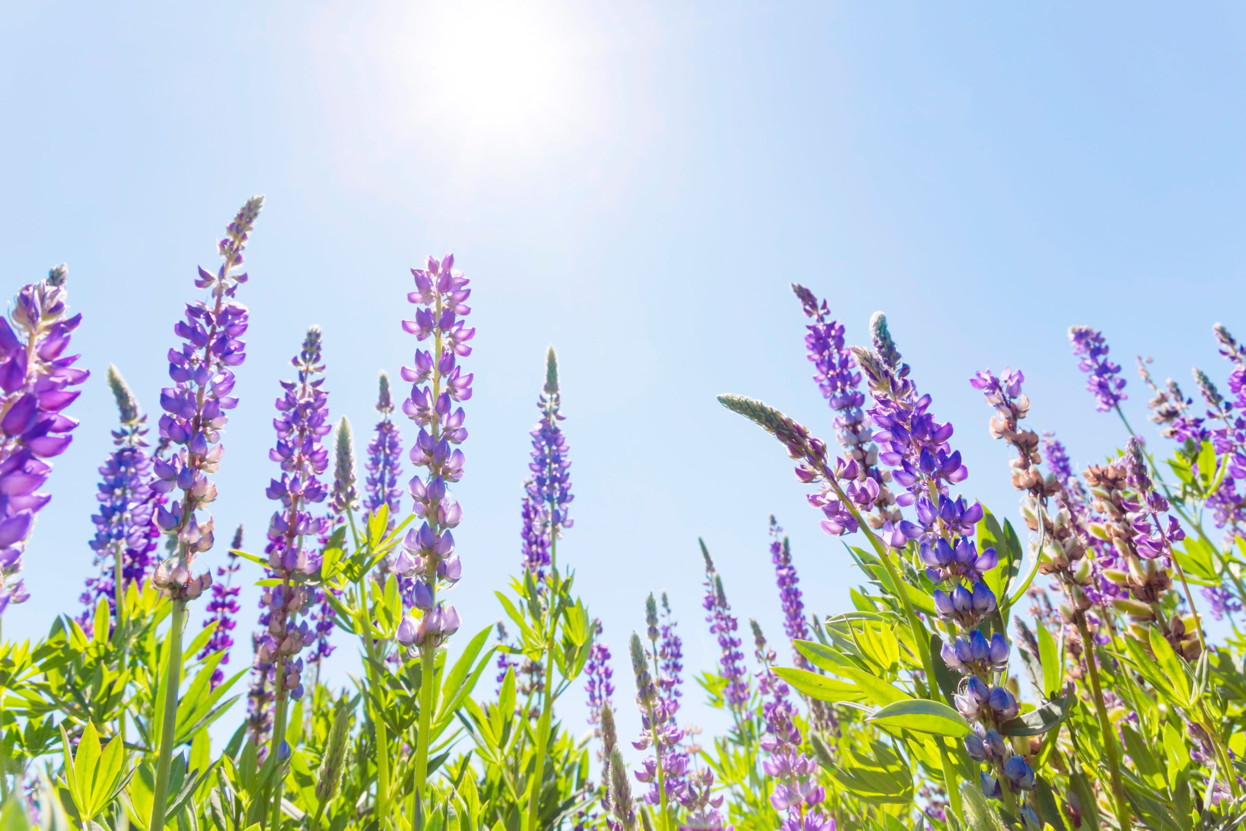 Best Flowers to Plant for Las Vegas in Springtime