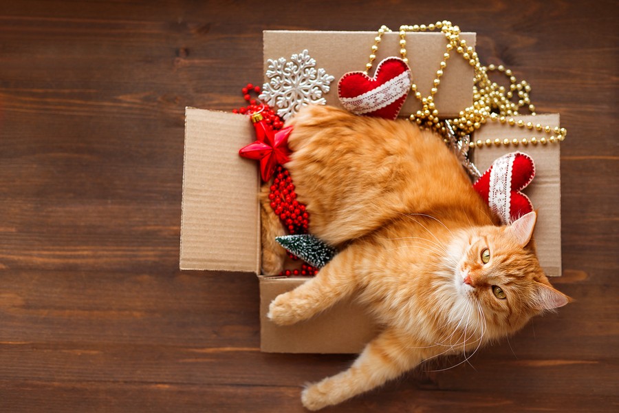 Ginger cat lies in box with Christmas and New Year decorations on wooden background. Fluffy pet