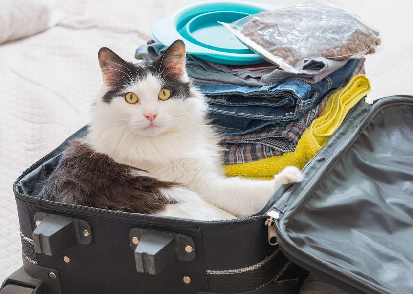Cat sitting in the suitcase or bag and waiting for a trip or move to a new home