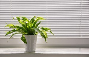 Houseplant in ceramic pot near bright shaded window