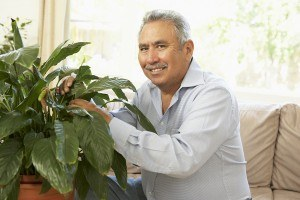 Senior hispanic man pruning houseplant at home