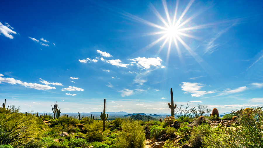 Saguaro Cacti under bright sun rays in the semidesert landscape of Usery Mountain Regional Park, Arizona near Phoenix